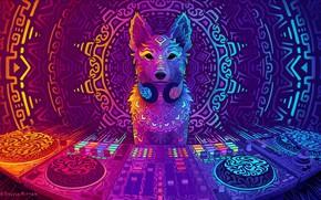 Picture dog, art, DJ, art, DJ, 2019, Disco Dingo, Sylvia Ritter, by Sylvia Ritter