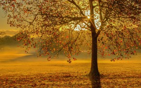 Picture autumn, leaves, rays, sunset, tree