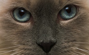 Picture cat, eyes, cat