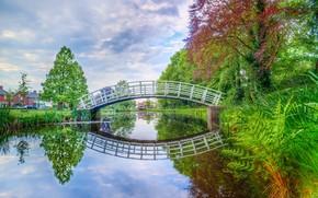 Picture summer, trees, bridge, river