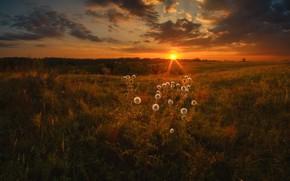Picture GRASS, HORIZON, The SKY, CLOUDS, PLAIN, SUNSET, DANDELIONS, DAL