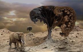 Wallpaper trees, elephant, heat, drought, Waiting for the rain, waiting for the rain