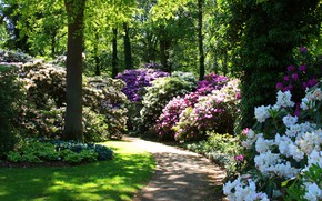 Picture greens, grass, the sun, trees, flowers, Park, Germany, track, the bushes, rhododendrons, Bremen, Rhododendronpark