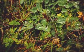 Picture Nature, Plant, Plants, Nature, Grass, Green, Wet, Flora, Natural, Plants, Drops, Blooming, Flora, Plant, Dew, …
