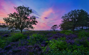 Picture trees, landscape, nature, dawn, hills, grass, Netherlands