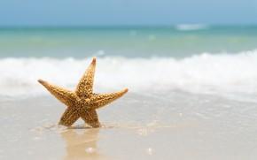 Picture sand, sea, wave, beach, summer, shore, star, summer, beach, sea, sand, marine, starfish