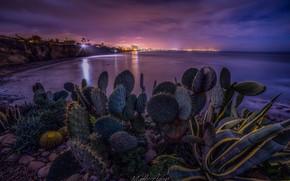 Picture landscape, night, the city, lights, stones, the ocean, shore, lighting, cacti, USA, San Diego, Matt …
