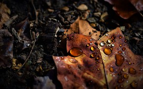 Picture leaves, drops, light, sheet, earth, leaf, leaf, lies, brown, water drops, autumn, autumn
