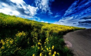 Picture road, summer, the sky