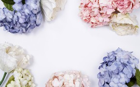 Picture flowers, background, blue, pink, flowers
