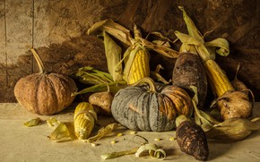 Picture corn, harvest, pumpkin, still life, vegetables, autumn, still life, pumpkin, corn, vegetables, harvest
