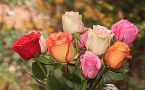 Picture photo, Flowers, Roses