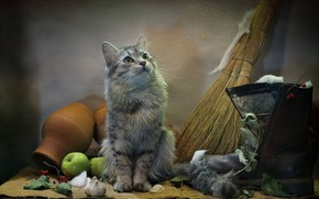Picture cat, cat, look, leaves, animal, apples, web, burlap, garlic, boots, wool, pot, broom, Kovaleva Svetlana, …