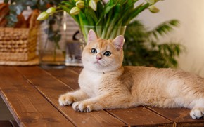Picture cat, look, flowers, table