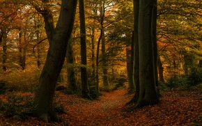 Picture autumn, forest, leaves, trees, branches, Park, thickets, foliage, yellow, track, red, alley, falling leaves, path, …
