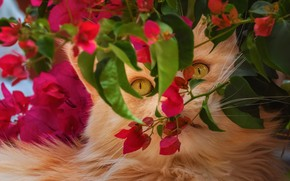 Picture cat, look, face, leaves, flowers, branches, garden, red