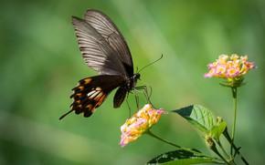 Wallpaper flower, macro, butterfly