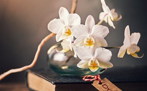 Picture branch, book, Orchid, flowers, jar