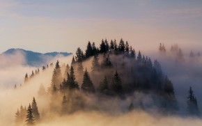Picture forest, fog, Germany, Bayern, Alps