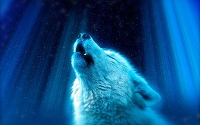 Picture the sky, wolf, stars, Night, вой.