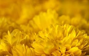 Picture nature, carpet, petals, garden