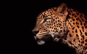 Picture eyes, look, face, light, close-up, portrait, leopard, profile, black background, wild cat, handsome