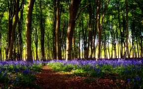 Picture forest, light, trees, flowers, branches, glade, spring, bells, lilac