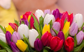 Picture flowers, bouquet, colorful, tulips, flowers, tulips, spring, multicolored