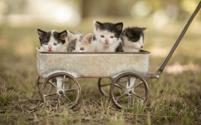 Picture look, face, cats, nature, pose, kitty, kittens, truck, kids, bokeh, Quartet, four, spotted, brood, tsumasaki