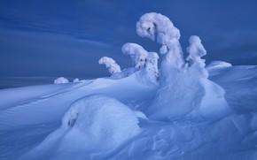 Picture winter, snow, trees, landscape, nature, ate, the snow, The Kola Peninsula, Maxim Evdokimov