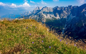 Picture grass, flowers, mountains
