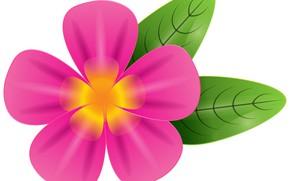 Picture flower, background, leaf, pink flower