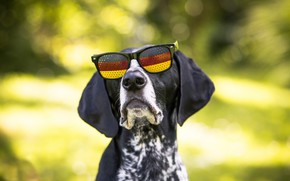 Picture each, dog, glasses