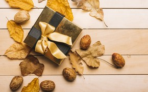 Picture autumn, leaves, background, tree, gift, colorful, tape, nuts, wood, background, autumn, leaves, present, gift