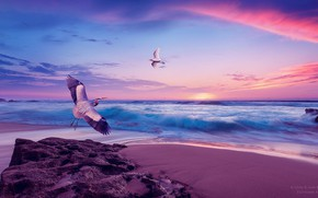 Wallpaper sea, the sky, sunset, shore, Seagull, stork