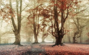 Picture autumn, forest, trees, branches, fog, Park, foliage