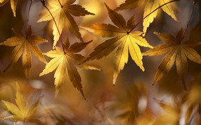 Picture golden, autumn, leaves, fall