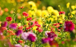 Picture flowers, bright, garden, flowerbed, bokeh, dahlias