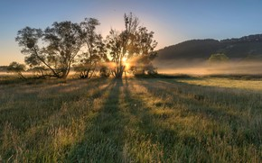 Picture field, tree, dawn, morning, Germany