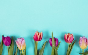 Picture flowers, colorful, tulips, pink, pink, flowers, tulips, spring, purple