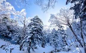 Picture winter, frost, forest, the sky, snow, trees, branches, nature, ate, slope, frost, the snow, pine, …