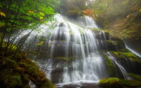 Picture water, trees, stones, waterfall, moss