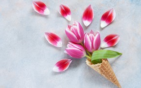 Picture petals, tulips, waffle cone