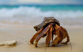 Picture sand, sea, wave, background, shore, crab, sink, shell, crab, claws, shell