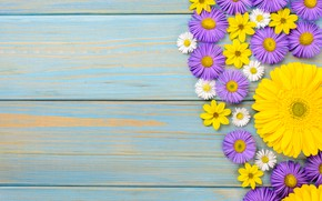 Picture flowers, chamomile, gerbera, yellow, wood, blue, flowers, garden, purple, gerbera
