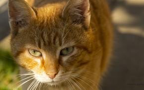 Picture cat, cat face, cat eye, cat cameras
