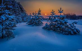 Picture winter, snow, tree, the snow, Aleksei Malygin