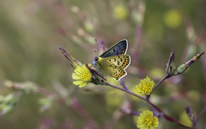 Picture macro, flowers, background, butterfly, blur, branch, yellow, insect, buds, yellow, bokeh