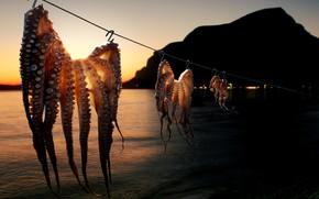Picture sea, shore, squid