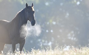 Picture horse, horse, morning, cool